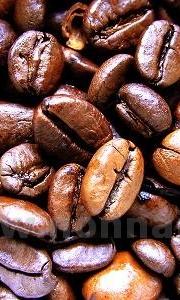 Gelato al caffè (senza panna)